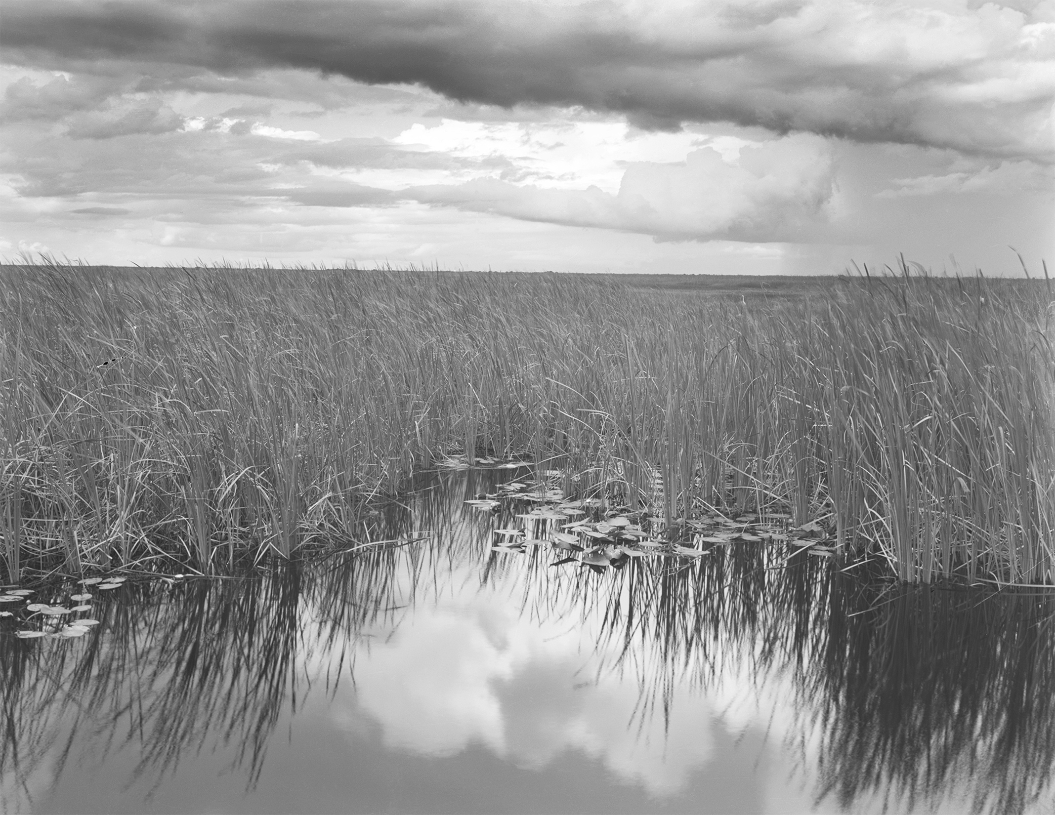 click to enter the Florida Everglades gallery