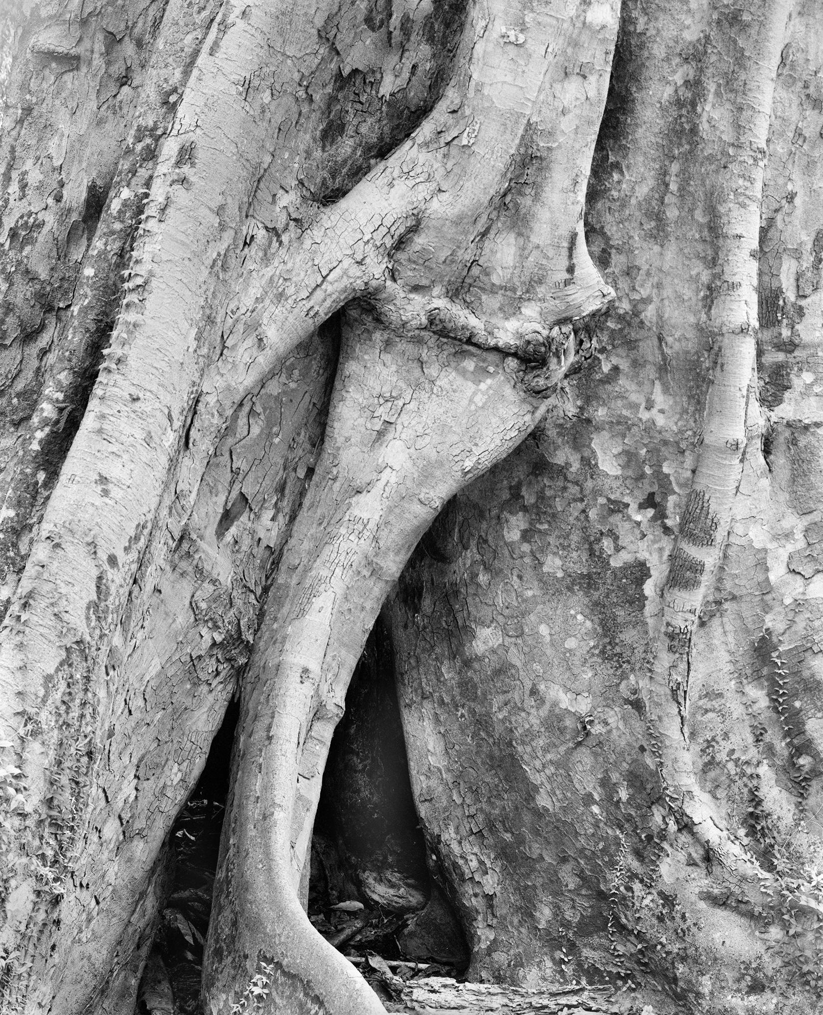 Banyan detail