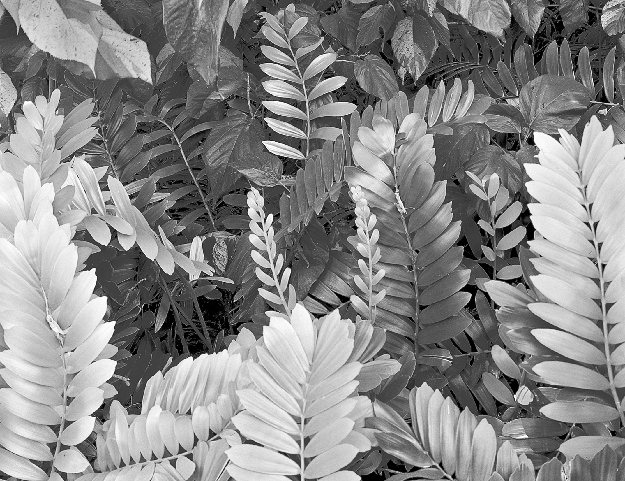Leaves, Davie, Florida