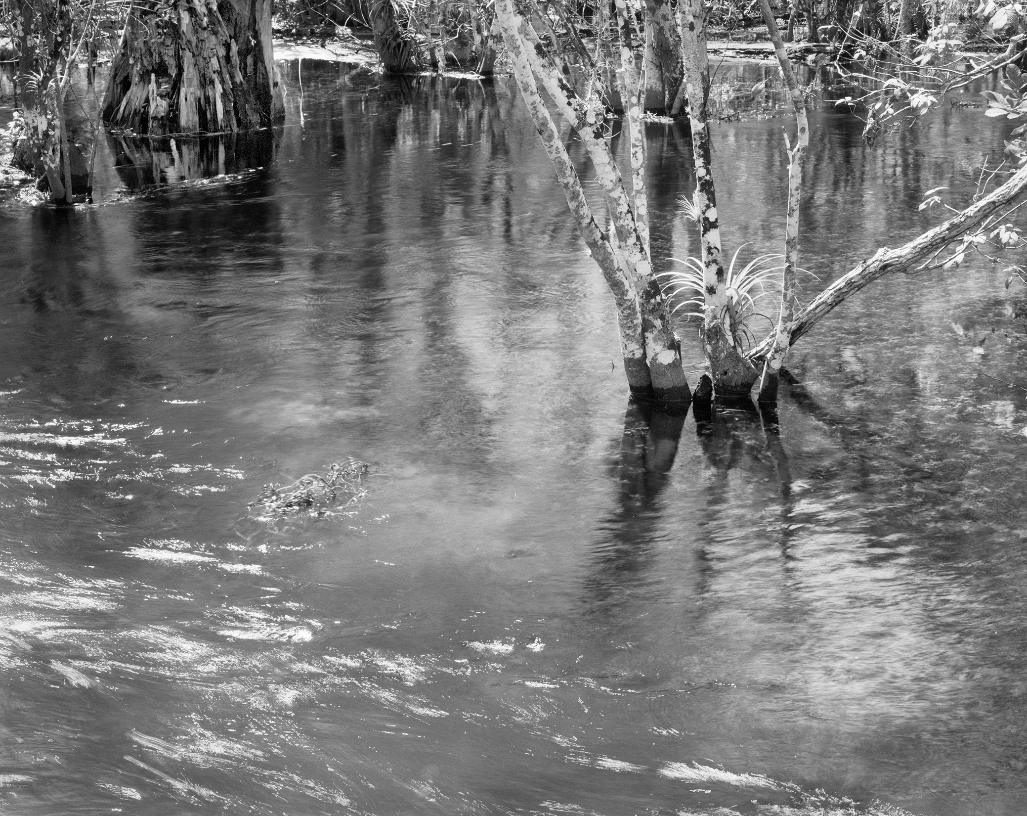 Moving waters, fakahatchee Strand