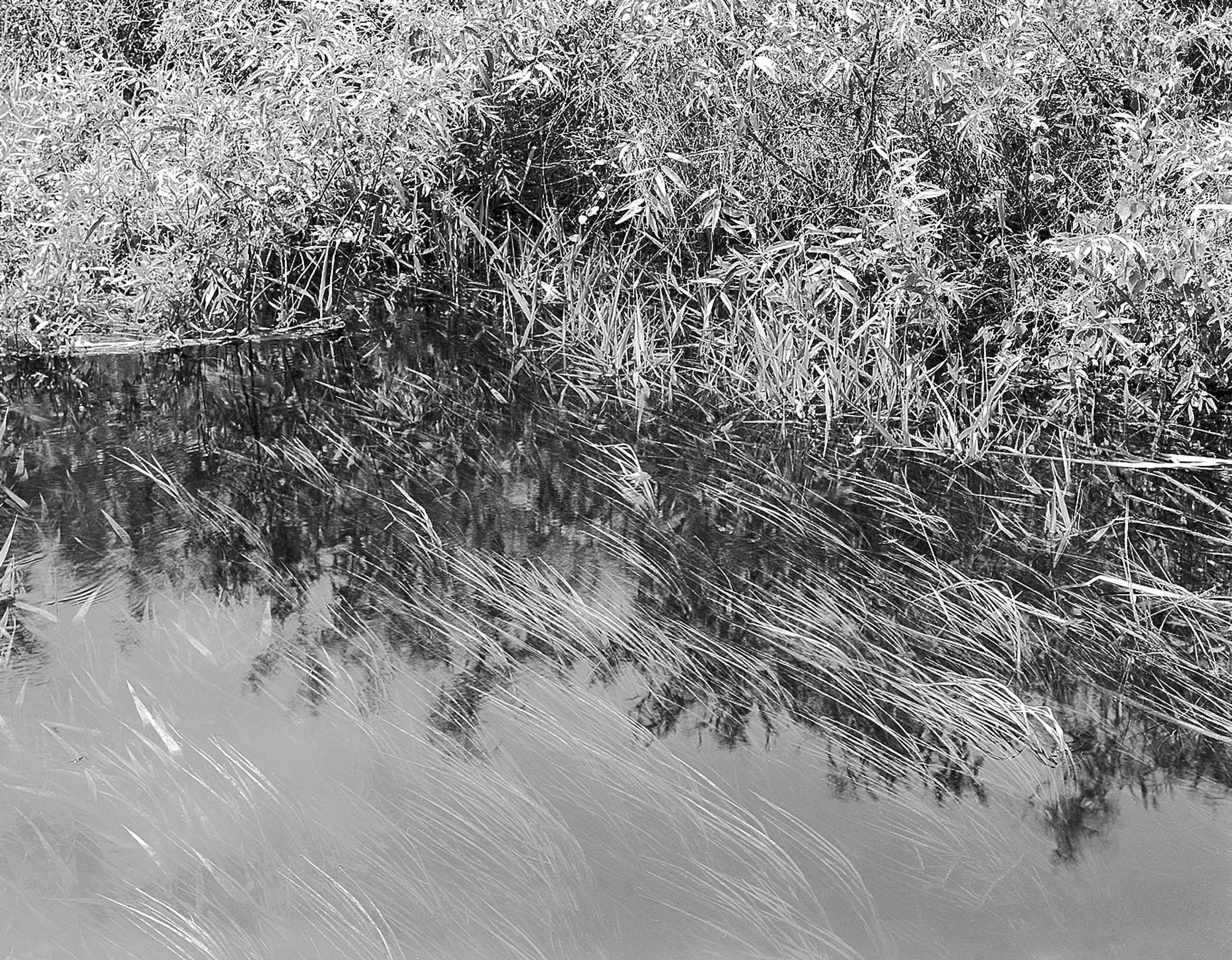 Submerged Grasses, Tamiami